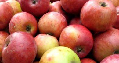 Брага из яблок для самогона — 2 варианта правильной браги